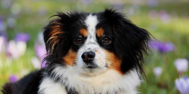 Les différents contrats d'assurance animal