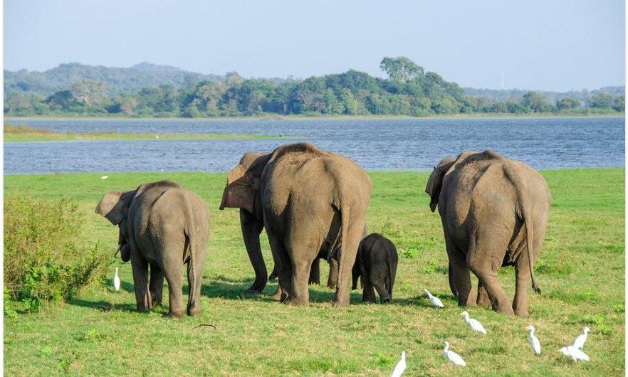 À la découverte d'une excellente destination aventure : le Sri Lanka